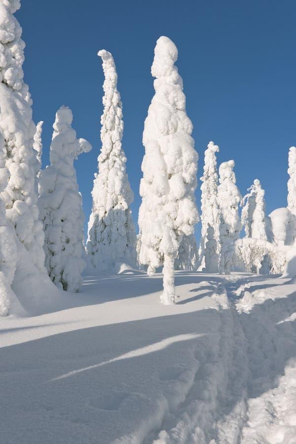 Alberi e cielo blu dello Snowy immagini stock