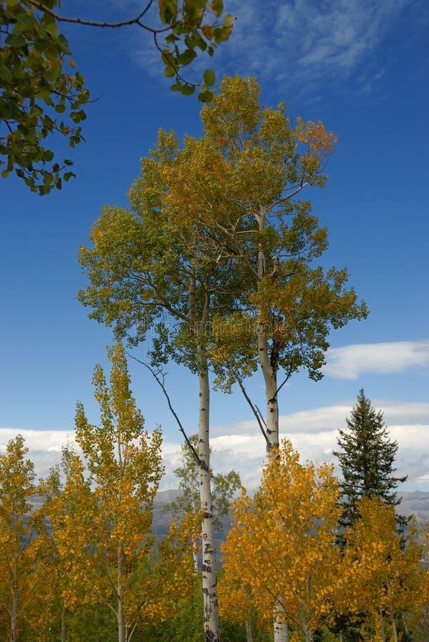 Alberi e cielo blu di autunno immagini stock libere da diritti