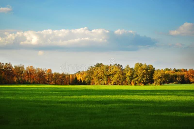 Alberi e cielo del campo fotografie stock