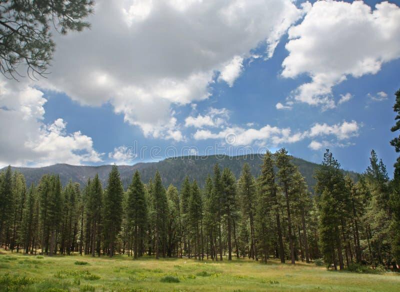Alberi e cielo di pino delle montagne immagini stock libere da diritti