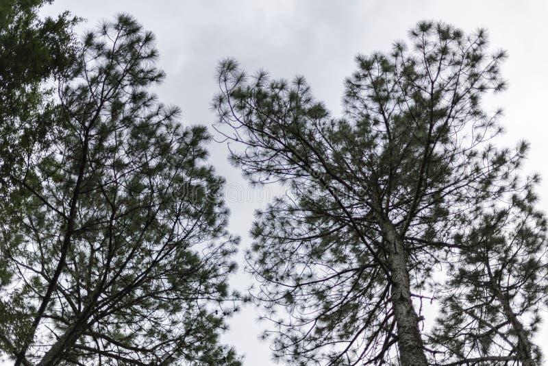 Alberi e cielo nelle colline fotografia stock