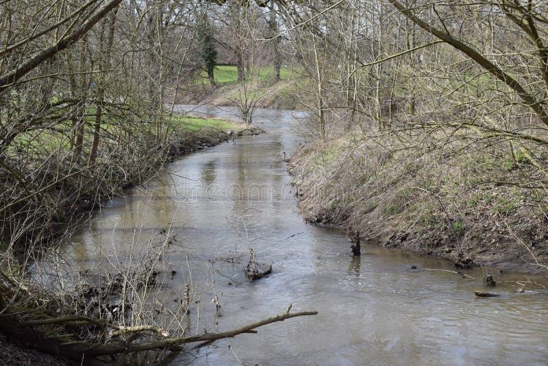 Alberi e fiume immagine stock libera da diritti