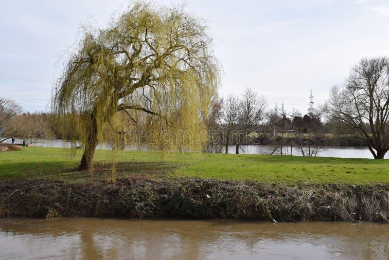 Alberi e fiume fotografie stock libere da diritti
