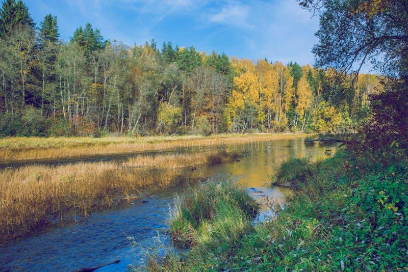 Alberi e fiume, autunno e giorno soleggiato Foto 2018 della natura di viaggio immagine stock