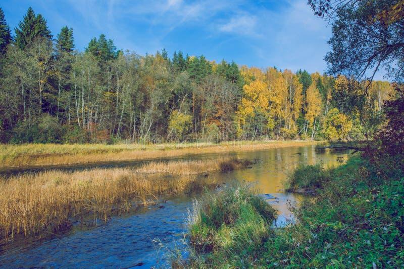 Alberi e fiume, autunno e giorno soleggiato Foto 2018 della natura di viaggio fotografia stock