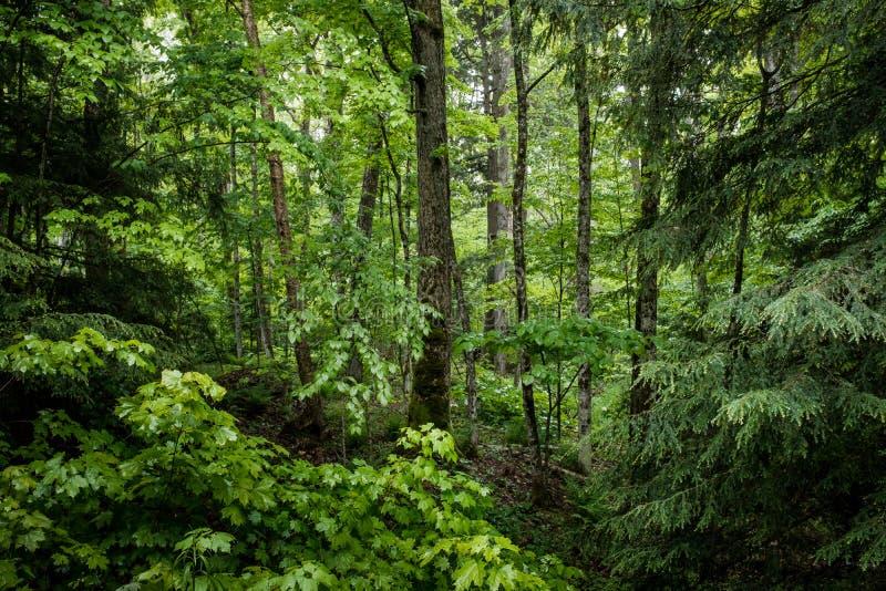 Alberi e fogliame al bordo di una foresta fotografia stock