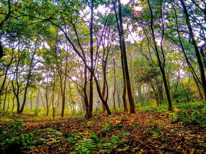 Alberi e foglie falled di mattina durante l'alba immagine stock libera da diritti