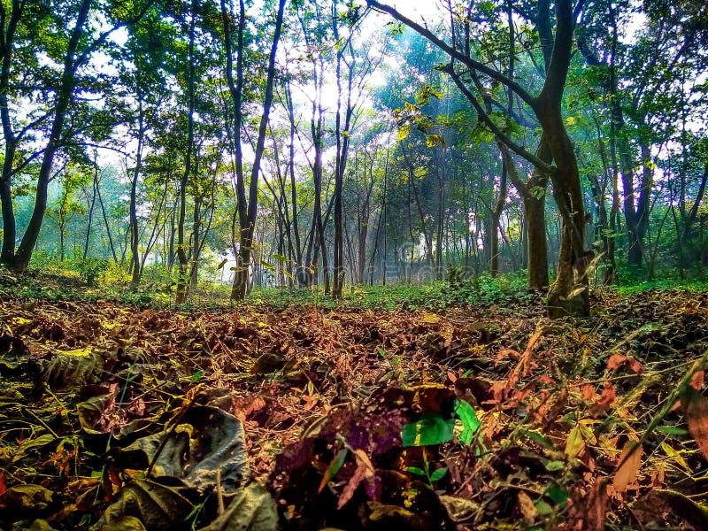 Alberi e foglie falled di mattina durante l'alba fotografia stock libera da diritti
