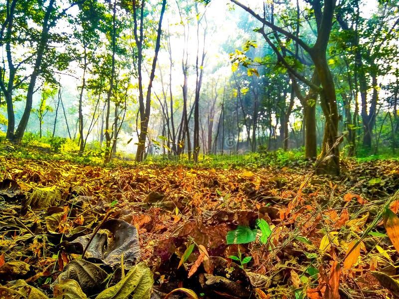 Alberi e foglie falled di mattina durante l'alba immagini stock