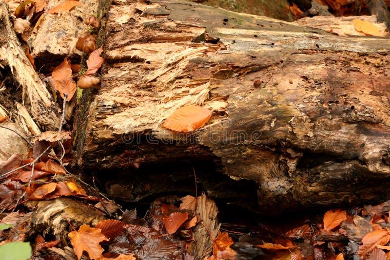 Alberi e foglie sul terreno di una foresta fotografia stock libera da diritti