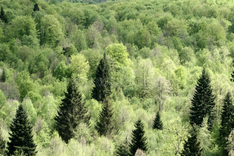 Alberi e foresta fotografia stock libera da diritti