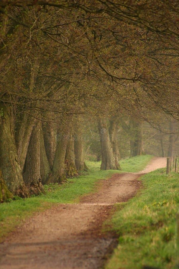 Alberi e foresta immagine stock
