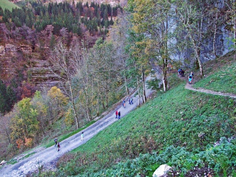 Alberi e foreste delle miscele nella catena montuosa di Alpstein e nella regione di Appenzellerland fotografie stock libere da diritti