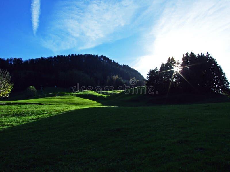 Alberi e foreste delle miscele nella catena montuosa di Alpstein e nella regione di Appenzellerland fotografie stock