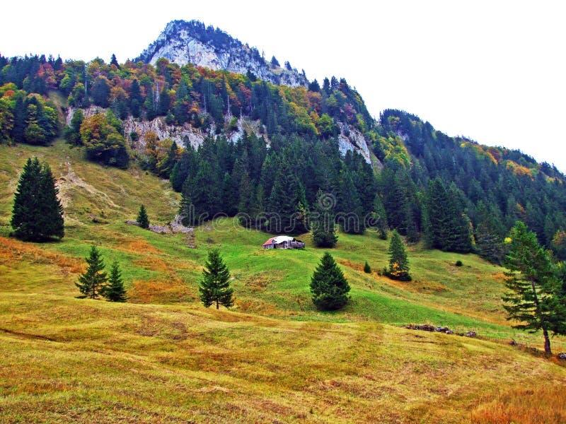 Alberi e foreste delle miscele nella regione di Obertoggenburg, Stein fotografia stock libera da diritti