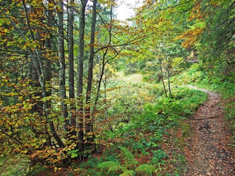 Alberi e foreste delle miscele nella regione di Obertoggenburg, Stein fotografie stock libere da diritti