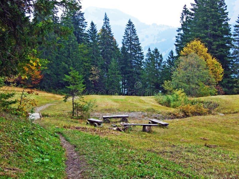 Alberi e foreste delle miscele nella regione di Obertoggenburg, Stein fotografie stock