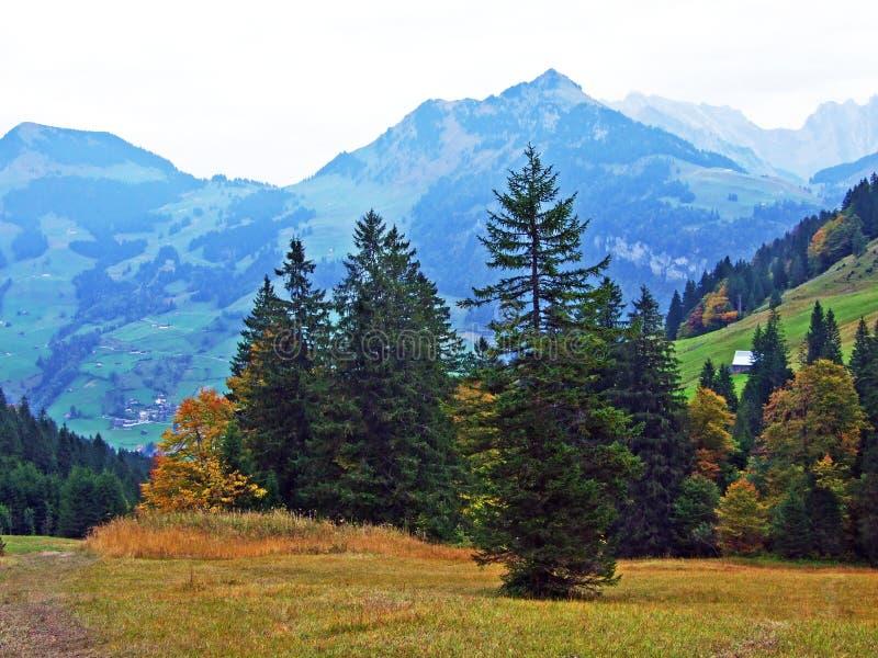 Alberi e foreste delle miscele nella regione di Obertoggenburg, Stein fotografia stock