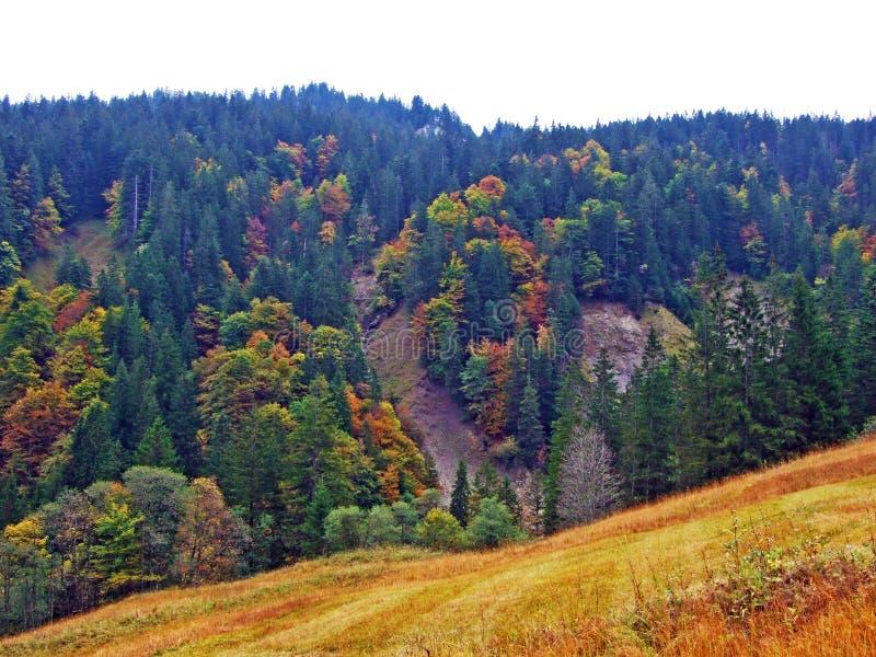 Alberi e foreste delle miscele nella regione di Obertoggenburg, Stein immagini stock