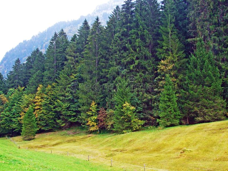 Alberi e foreste delle miscele nella regione di Obertoggenburg, Stein immagine stock