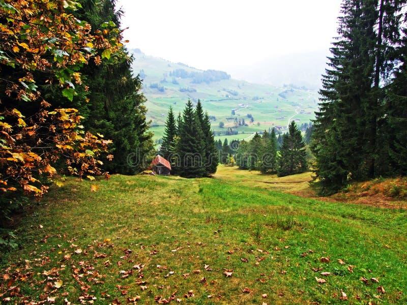Alberi e foreste delle miscele nella regione di Obertoggenburg, Stein immagine stock libera da diritti