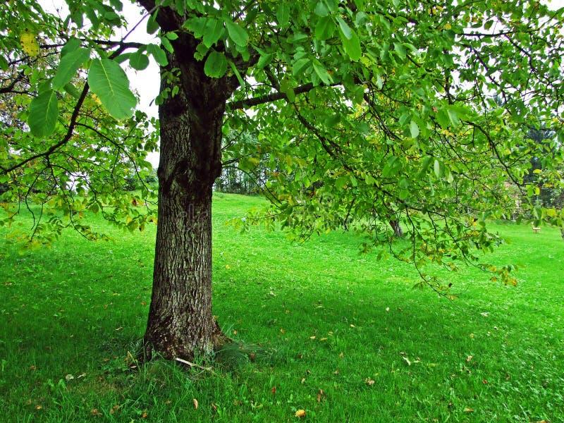 Alberi e foreste delle miscele nella regione di Obertoggenburg, Stein immagini stock libere da diritti
