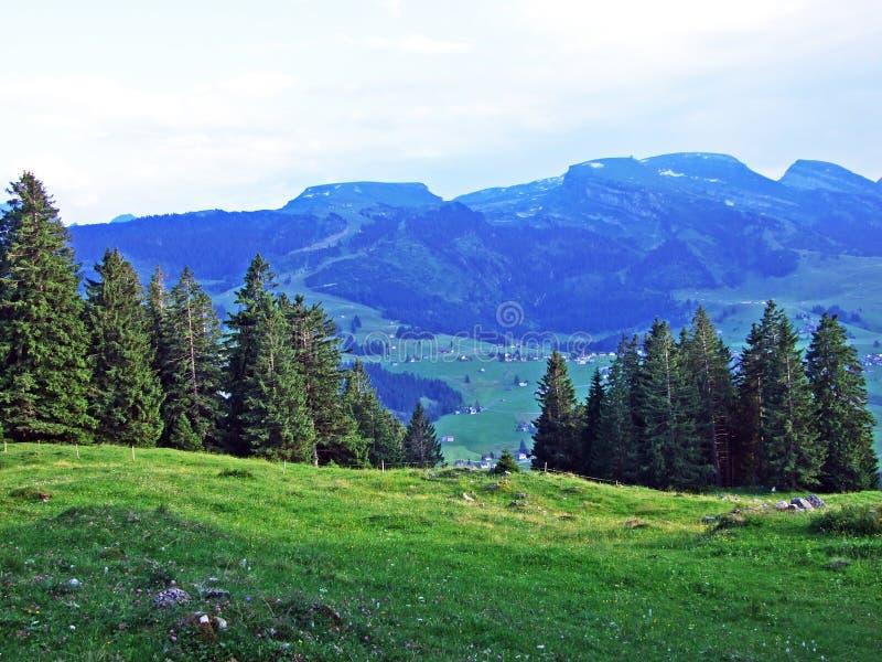Alberi e foreste sempreverdi dei pendii della catena montuosa di Alpstein e nella valle di Thur del fiume fotografia stock