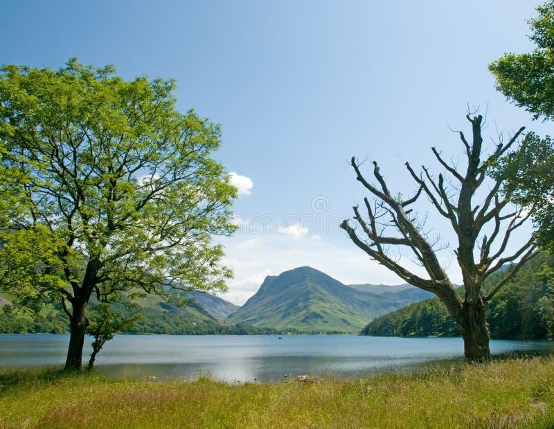Alberi e lago fotografia stock libera da diritti