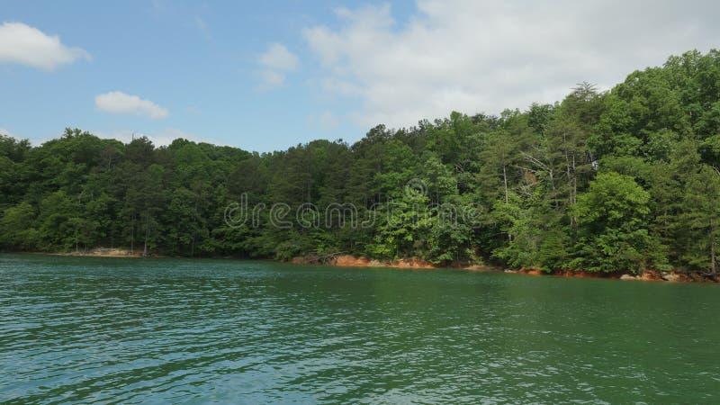 Alberi e lago immagine stock
