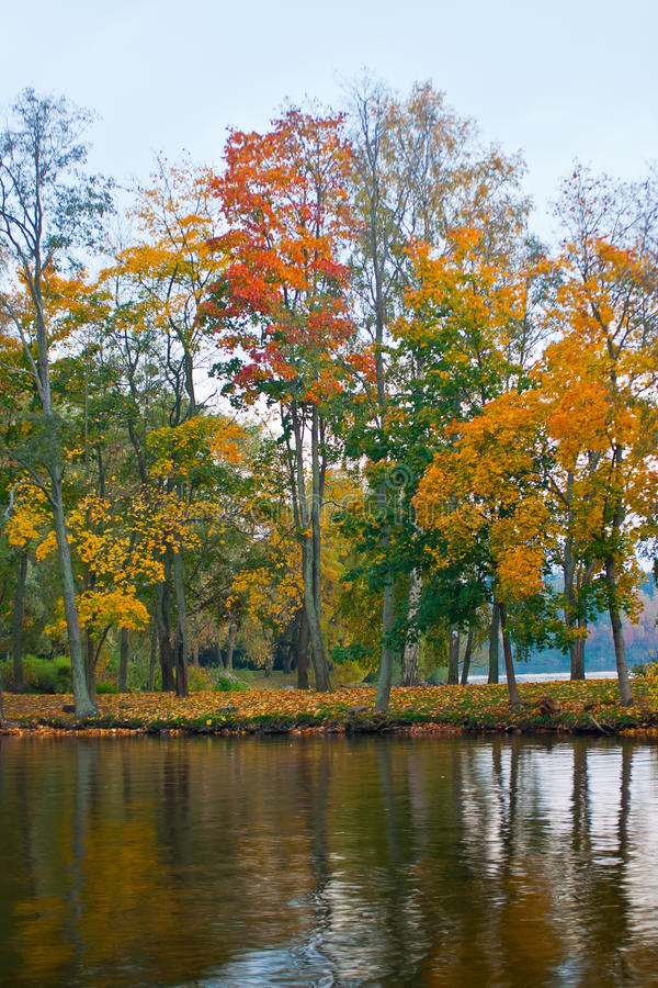 Alberi e lago di autunno fotografia stock