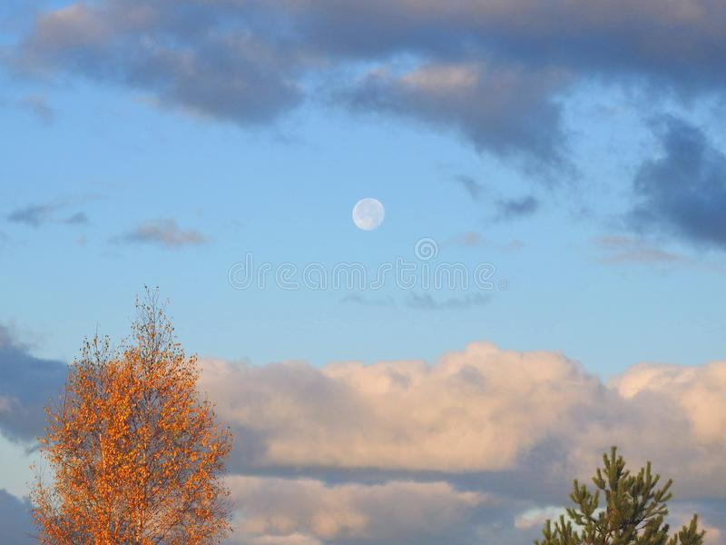 Alberi e luna in bello cielo, Lituania immagine stock
