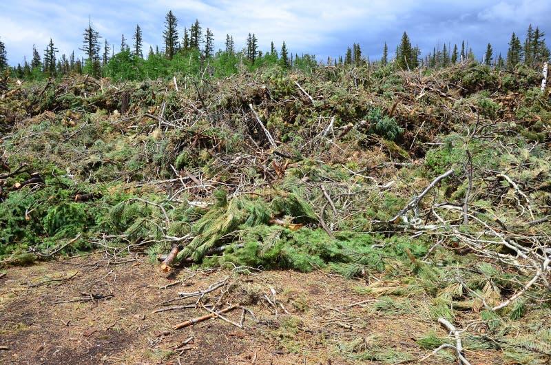 Alberi e membra ad un deposito residuo verde fotografie stock libere da diritti