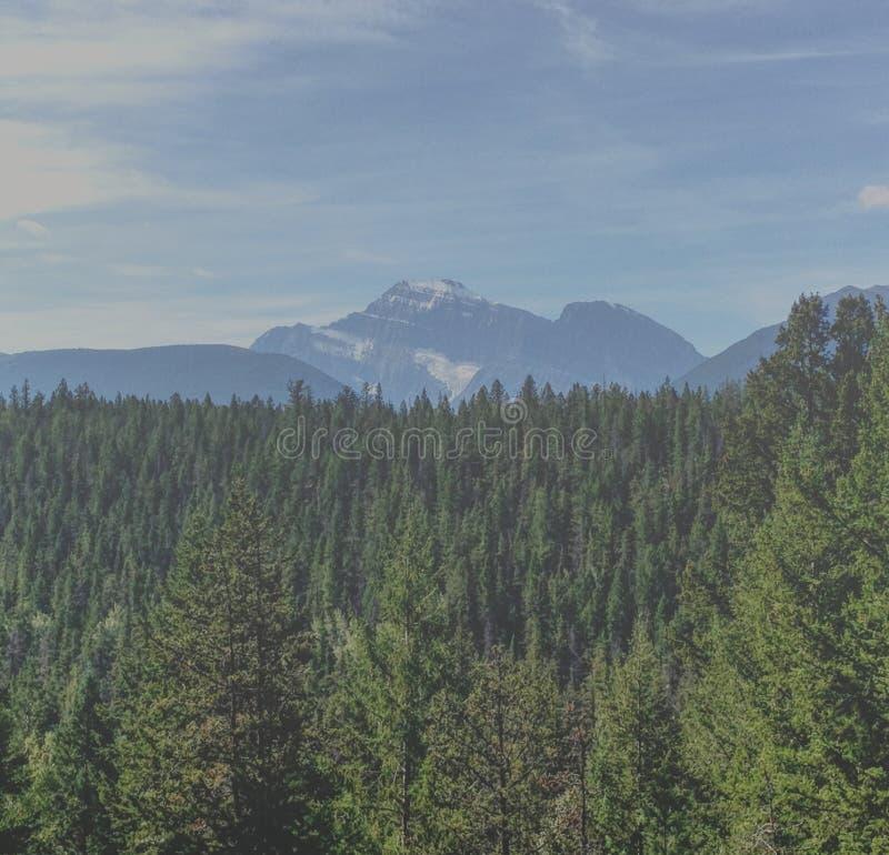 Alberi e montagne immagini stock