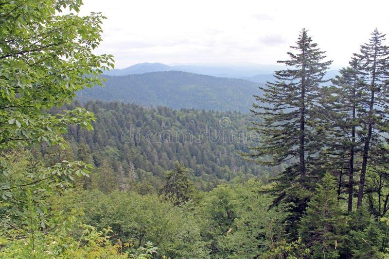 Alberi e montagne nel parco nazionale di Great Smoky Mountains fotografia stock