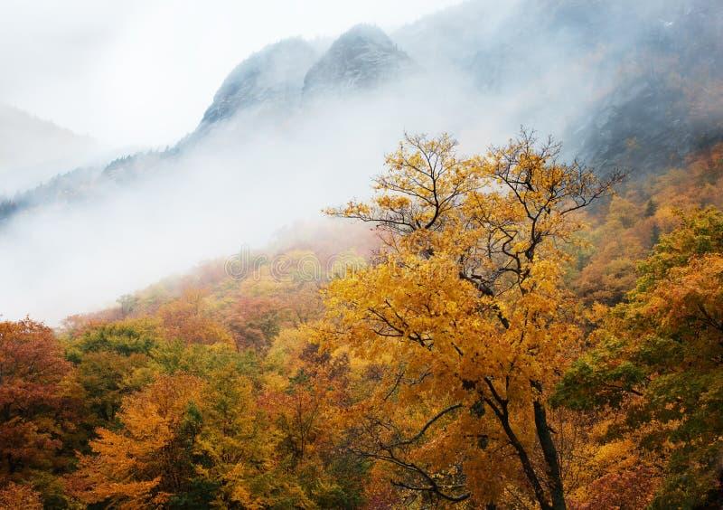 Alberi e nebbia in autunno fotografie stock