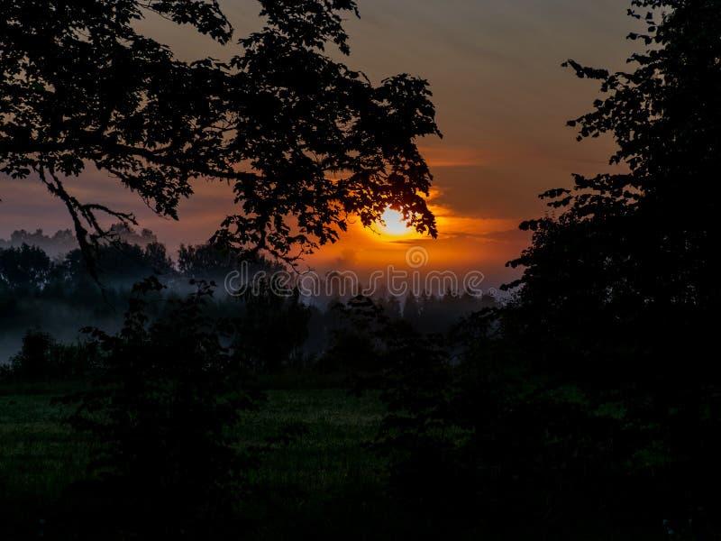 Alberi e nebbia di mattina fotografie stock libere da diritti