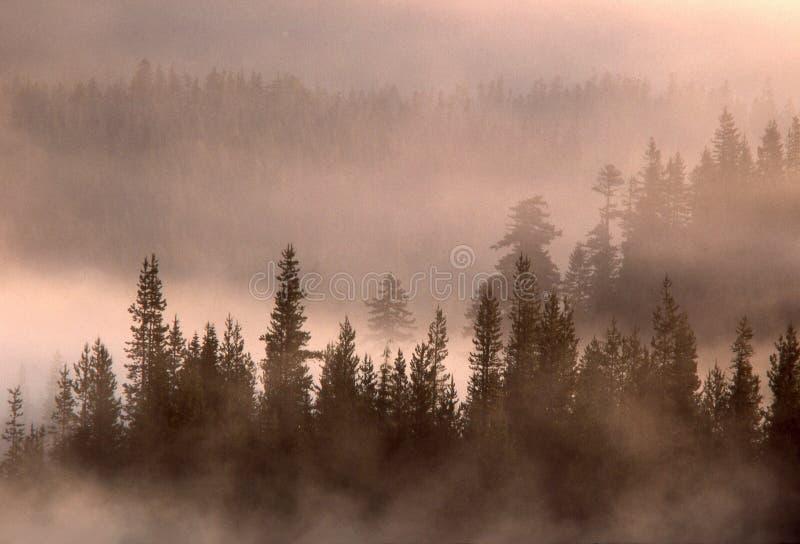 Alberi e nebbia di sollevamento fotografia stock