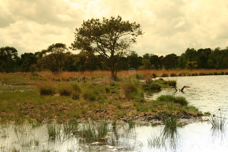 Alberi e nubi olandesi di paesaggio immagine stock libera da diritti