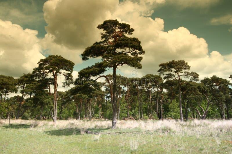 Alberi e nubi olandesi di paesaggio immagine stock
