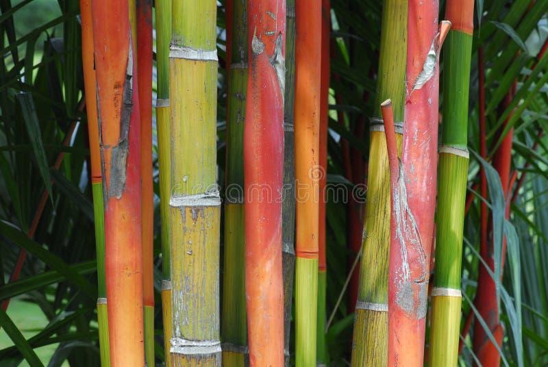 Alberi e piante fotografie stock libere da diritti