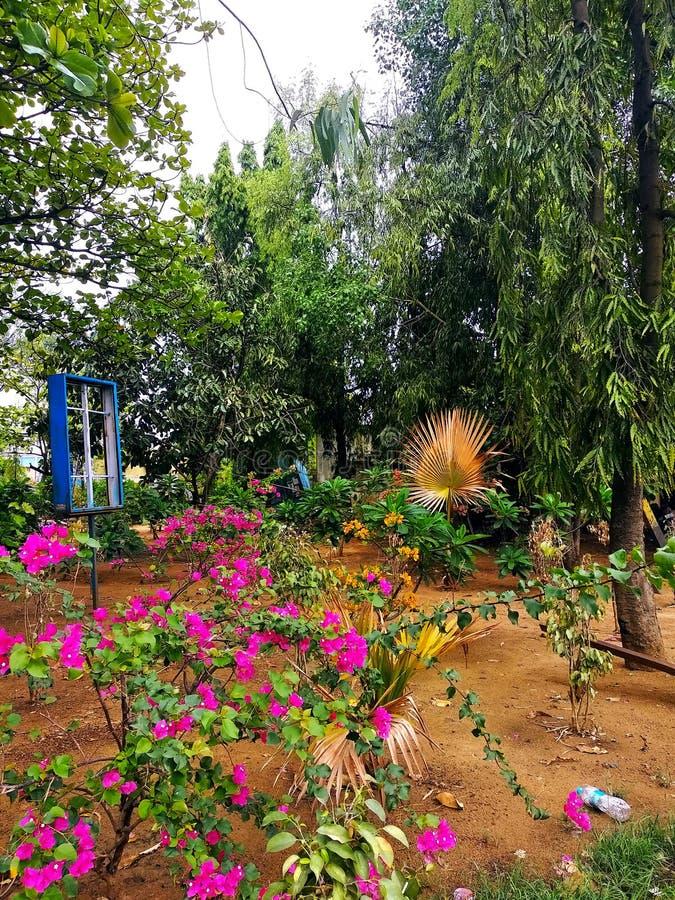 Alberi e piante piantati per controllare riscaldamento globale in India fotografia stock libera da diritti