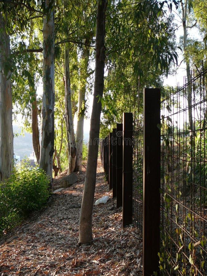 Alberi e recinto di eucalyptus immagine stock