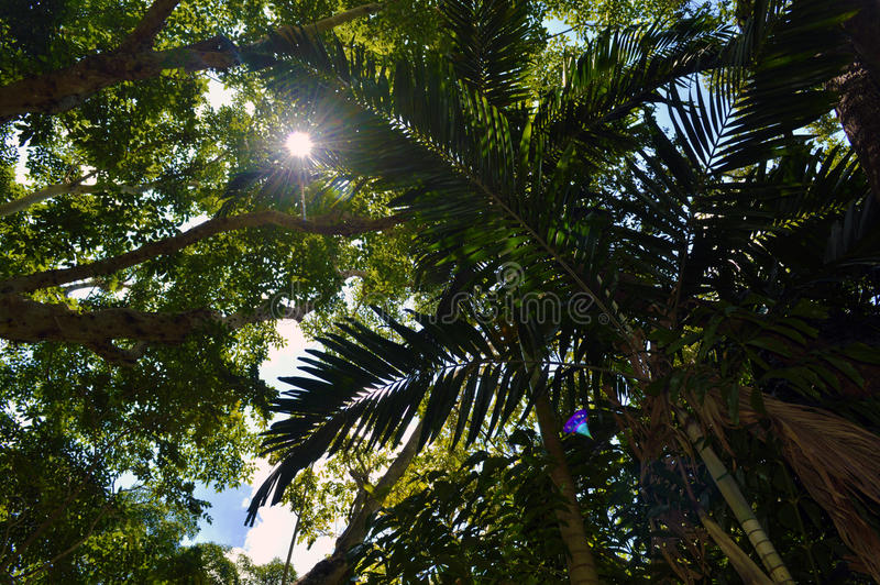 Alberi e sole luminoso fotografia stock libera da diritti