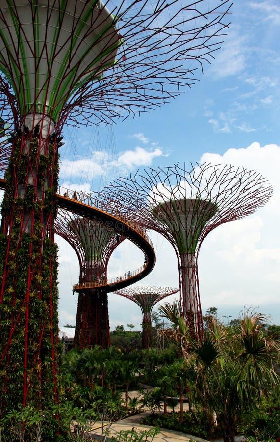 Alberi eccellenti nel giardino di singapore fotografia stock immagine di giardino ponticello - Prezzi alberi da giardino ...