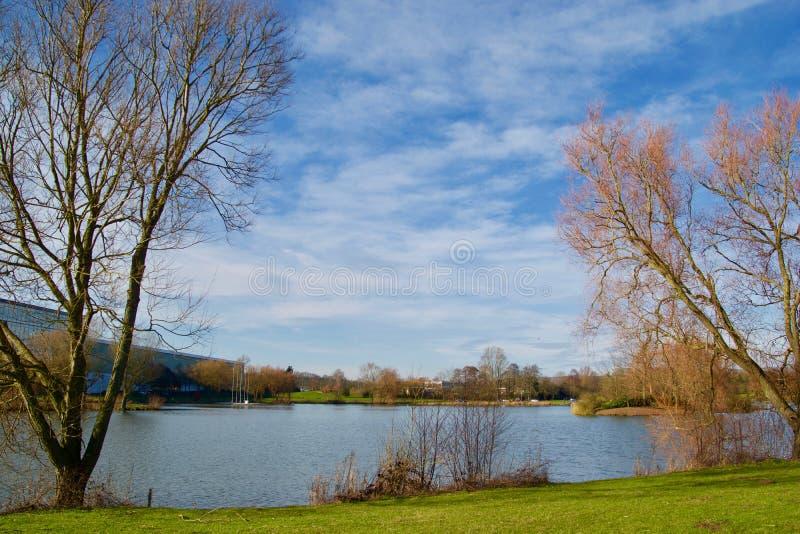 Alberi ed il lago fotografie stock libere da diritti