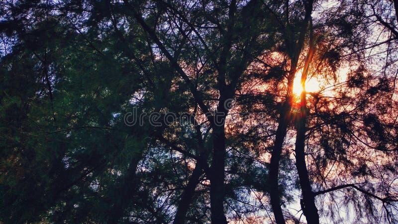 Alberi ed il Sun fotografia stock libera da diritti