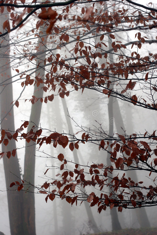 Alberi ed inverno della foresta fotografia stock