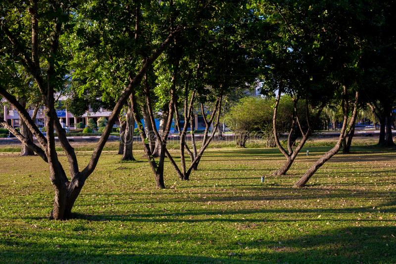 Alberi ed ombra fotografia stock