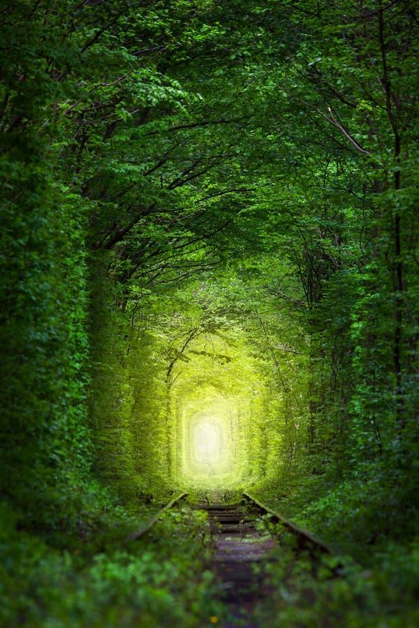 Alberi fantastici - tunnel dell'amore con luce leggiadramente fotografia stock libera da diritti