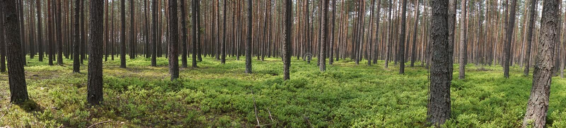 Alberi in foresta fotografie stock